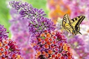 Nomi di fiori: origine, significato e curiosità