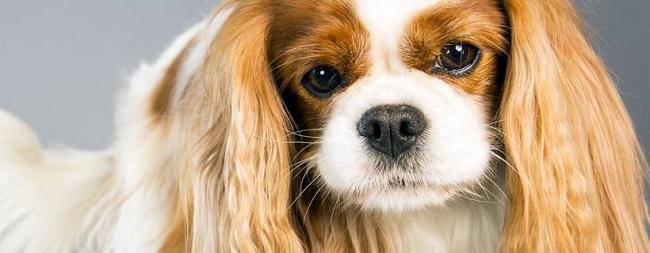 Cani Piccola Taglia