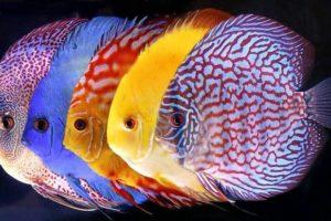 Pesce d'acqua dolce