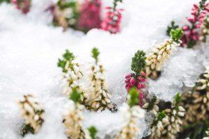 Fiori Invernali