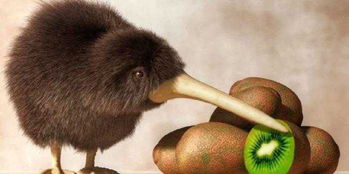 Kiwi Animale