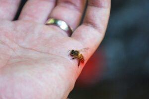 Puntura insetto